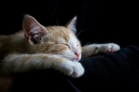 cutsleep
