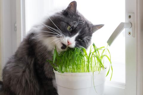 猫のおすすめおやつ、種類、量、あげ方