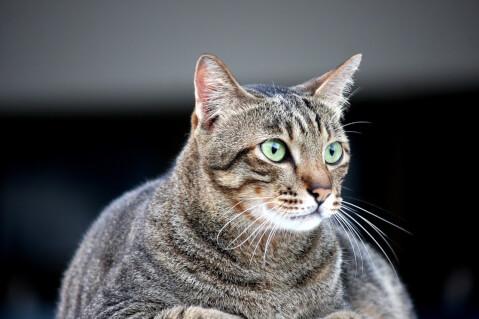猫 ヨーグルト 量 毎日 効果
