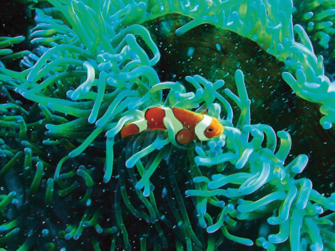 colofulfish
