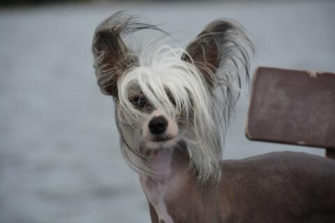 風で髪がなびくチャイクレ