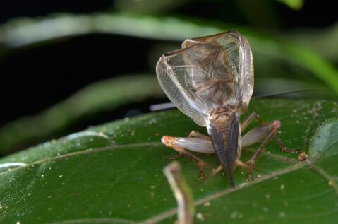 コオロギ 飼育 鳴き声 餌 季節