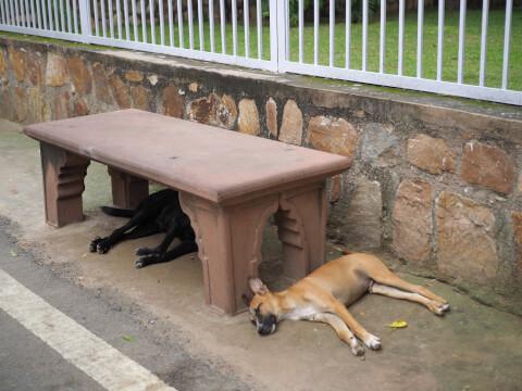 犬 ベンチ ぐったり