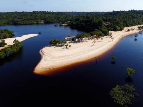 ディスカスアマゾン 熱帯魚 通販 値段 飼育 寿命 魚 混泳
