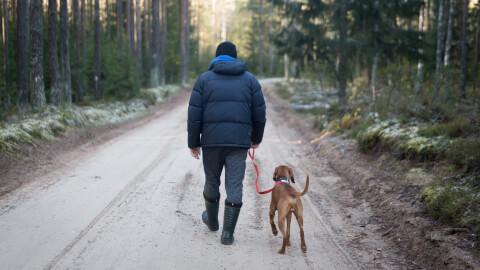 camp-walk