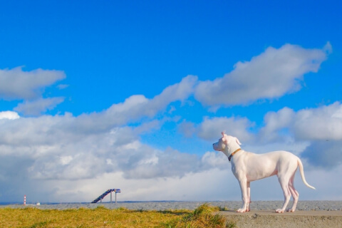 white dog and the sky