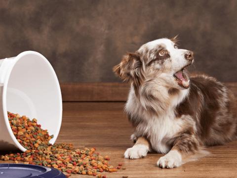 犬 吠える 理由 しつけ 対策 意味