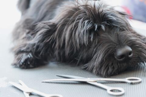 トリミング 犬 頻度  値段 資格 自宅