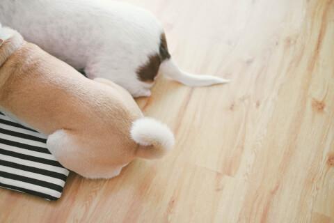 犬 あくび 原因 意味 多い 病気 うつる 嬉しい