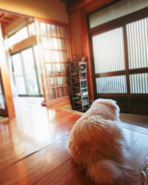 dog_at_the_front_door