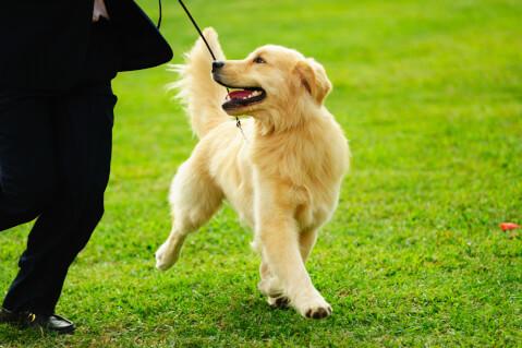 ドッグ 犬 ブリーダー 資格 内容 仕事 ペットショップ