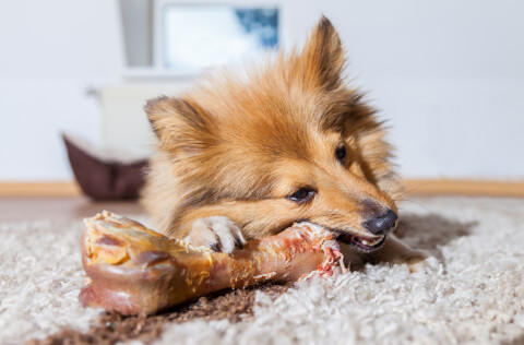 犬 ガム 飲み込む 食べた 誤飲 腸閉塞 おすすめ 成分 無添加