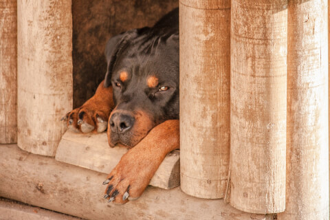 dog_inhouse