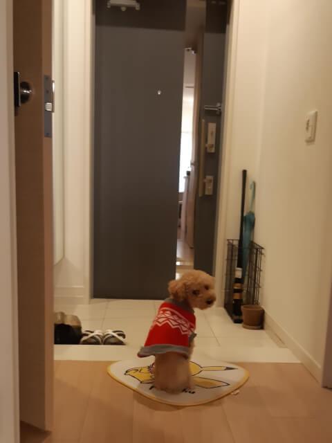 dog_looking_back