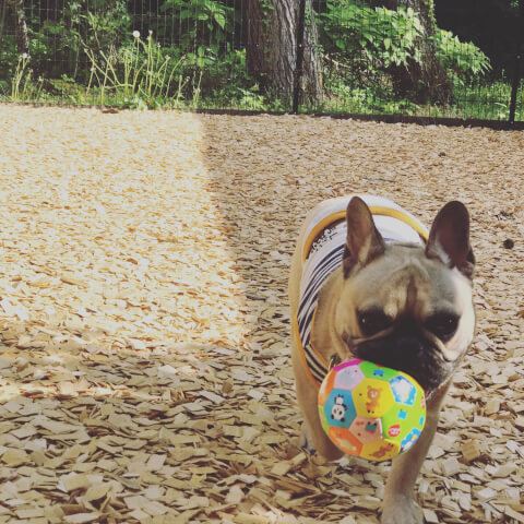dog_playing_with_ball