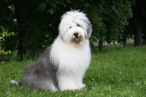 犬 人気 犬種 種類 大型 名前 小型 体重 寿命