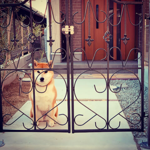 dog_sitting_over_the_fence