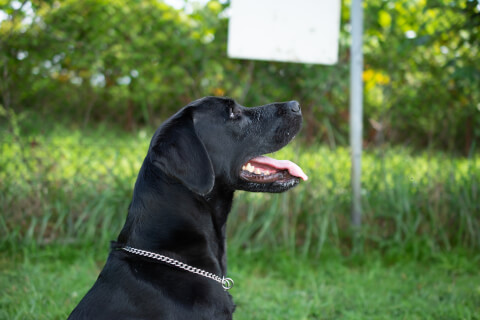 dog_stare_at_something