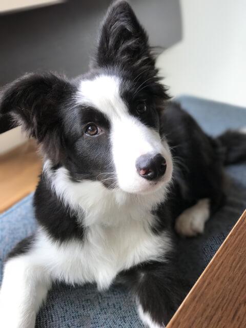 dog_tlits_head