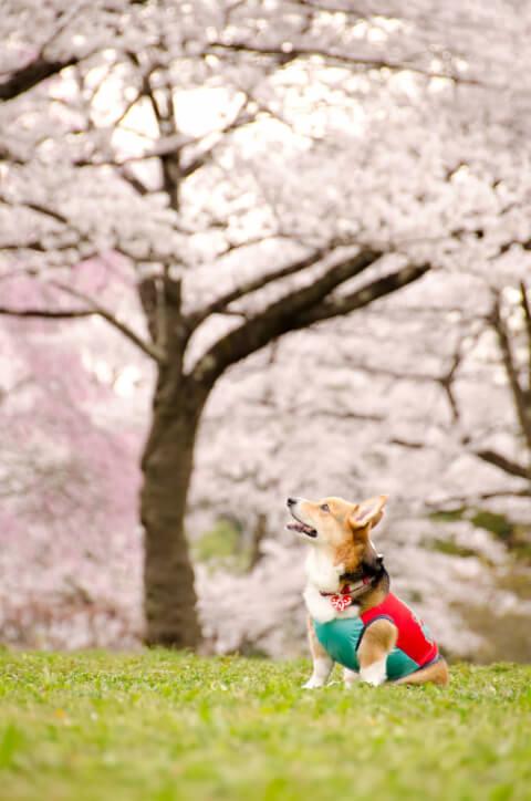 dog_flower