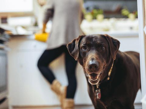 犬 ヨーグルト 効果 量 おすすめ 毎日 レシピ