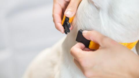 アジリティ 犬種 トレーニング 年齢 教室 ルール