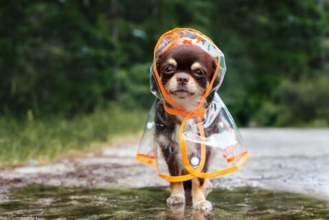 犬 服 おしゃれ 冬 サイズ 夏 雨 かわいい