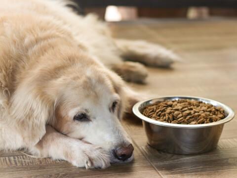 犬 エサ 餌 種類 選び方 手作り 年齢 子犬 成犬 シニア おすすめ 人気
