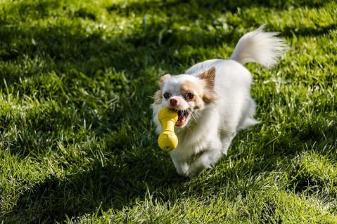 犬 運動する