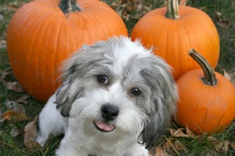 犬とかぼちゃ
