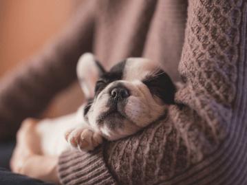 初心者や室内でも飼いやすい犬を13種厳選 Petpedia