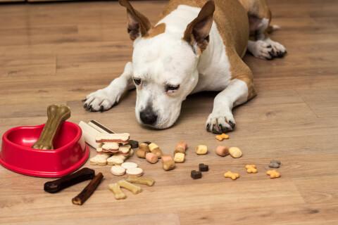犬のおすすめおやつ、健康、頻度、種類、安全