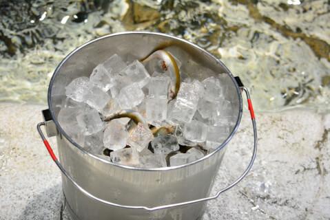 餌と氷の入ったバケツ
