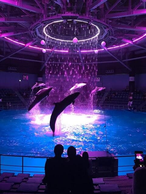 イルカ ショー 水族館 イルカ 種類 知能 寿命 クジラ 違い