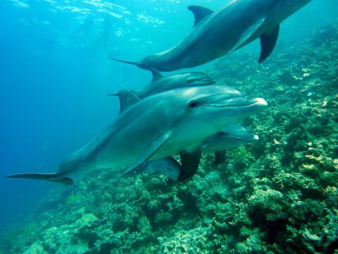 サンゴ礁とイルカ