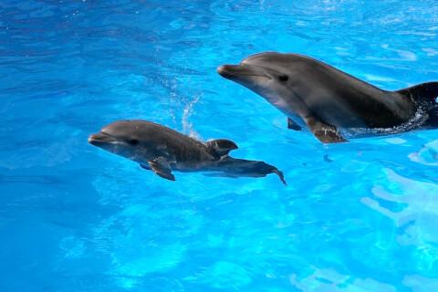 イルカ 種類 知能 寿命 クジラ 違い 子育て