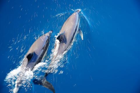 イルカ 種類 知能 寿命 クジラ 違い マイルカ