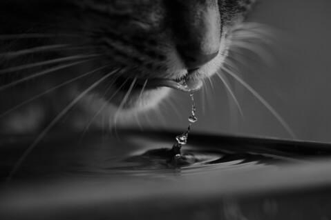 drinkingcat