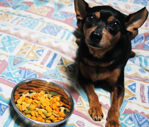 dog_food_2