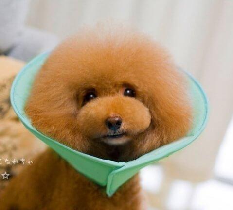エリザベスカラー 犬