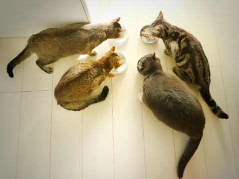 feeding_cats