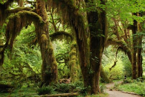 アメリカの森林のイメージ