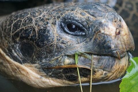 tortoise_face