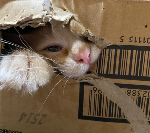 gnawing_cardboard