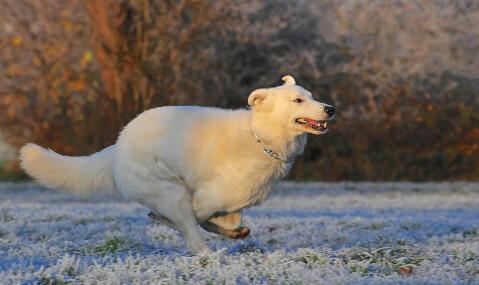 グルーミングで綺麗になった犬
