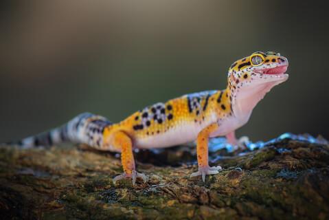 ペットにおすすめの爬虫類、人気の種類