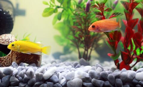熱帯魚と水草 白点病