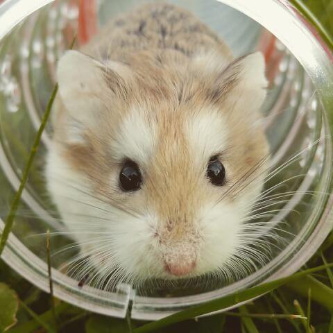 hamstertube