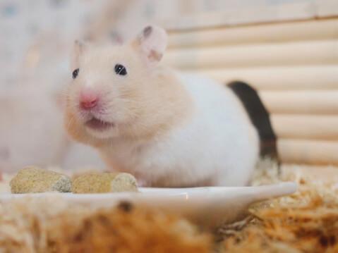 小動物 ハムスター ペット
