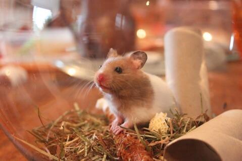 hamster03.jpg